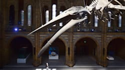 À 10 ans, il corrige une erreur du Musée d'histoire naturelle de