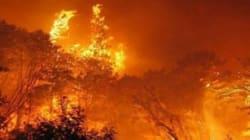 Le coup de gueule de cette habitante du gouvernorat de Jendouba suite aux incendies qui ravagent la région