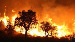 Incendie de forêt à Maâlla (Bouira): 30 victimes et 12 habitations