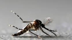 Αργολίδα: Μια ηλικιωμένη το πρώτο θύμα από τον ιό του δυτικού