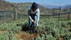 Ξεκίνησε η διαδικασία πληρωμής των νέων αγροτών, με την πρώτη δόση στα 148