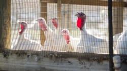 Βρέθηκαν 2000 ζώα σε άθλιες συνθήκες σε βιομηχανική αποθήκη στο Λος Άντζελες, 1000 εκ των οποίων