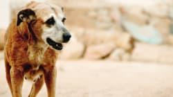 Αλλεπάλληλα κρούσματα δηλητηρίασης αδέσποτων ζώων στην Καλαμπάκα καταγγέλλει ο