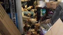 Carnage animal à Los Angeles: Plusieurs milliers d'animaux retrouvés morts et maltraités dans un
