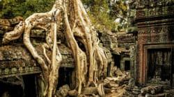 Forscher finden heraus, was eine ganze Stadt in Kambodscha schleichend ausgelöscht