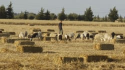 L'agriculture et les services ont aidé à la relance de la croissance économique lors du premier semestre de l'année