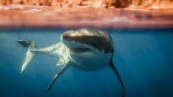 Σέρφερ ξεφεύγουν το τελευταίο λεπτό από επίθεση καρχαρία σε