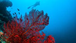 Pêche au corail: 3 arrêtés fixent les conditions et modalités d'exploitation et de