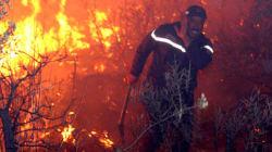 Incendies de forêts: bilan désastreux pour le couvert