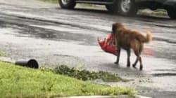 Pendant l'ouragan Harvey, ce chien n'a pas oublié le