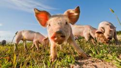 방목과 동물복지를 지지한다. 하지만 그것으로 식품안전을 보장할 순