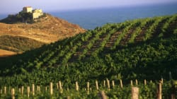 Κρασί 6.000 ετών ανακαλύφθηκε στη