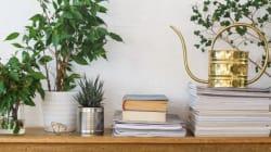 Αυτά τα 5 φυτά εσωτερικού χώρου θα σας κάνουν να νιώσετε αμέσως