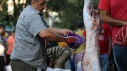 Tunisie-Carcasse de mouton putréfiée : Un problème passé sous