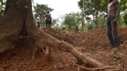 Guardian: Πώς η βιομηχανία της σοκολάτας καταστρέφει τα δάση της