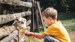 Tiere verstehen - von Kindheit