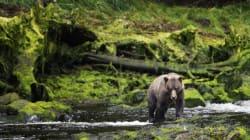 Umsiedlung von vier Braunbären in der Ukraine - Rettung für Dina und ihre