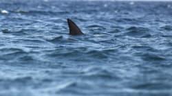Καρχαρίας 4 μέτρων πιάστηκε στον Αστακό