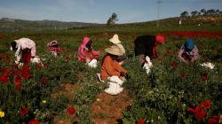 La Tunisie célèbre la journée internationale de la femme rurale. Quels