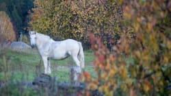 Θεσσαλονίκη: Δασκάλες έβαλαν νήπια να ζωγραφίσουν πάνω σε άλογο. Ζωόφιλοι έκαναν