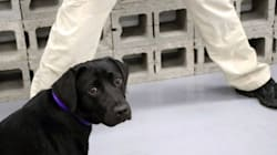 Ce chien ne voulait pas du tout renifler les bombes pour la