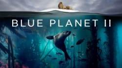 Το «Βlue Planet II» του ΒΒC ξεκινά και υπόσχεται να μας χαρίσει μοναδικές εικόνες από τον θαλάσσιο