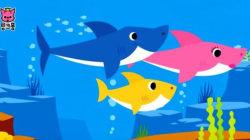 핑크퐁 상어가족이 유튜브에서