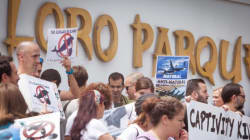 PETA-Aktivistin: Business Class in den Loro