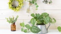 10 φυτά εσωτερικού χώρου που μας σώζουν από αλλεργίες, αϋπνία και κρυολογήματα (σύμφωνα με επιστήμονες της