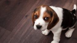 '사람은 사람보다 개를 더 사랑한다'는