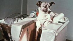 Η ιστορία του πρώτου σκυλιού που έφτασε στο διάστημα (πριν από τον