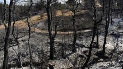 Σοκαριστικά τα στοιχεία για τις πυρκαγιές στην