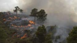 Feux de forêts: la DGF compense les populations