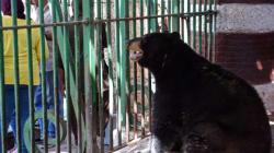 Au Caire, le plus vieux zoo d'Afrique fait grise