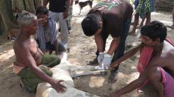 Zur UN-Klimakonferenz: Von Flut bis Dürre - Tiere sind die traurigen Verlierer der extremen