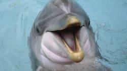 Στον εισαγγελέα για τις επιδείξεις δελφινιών το Αττικό Ζωολογικό
