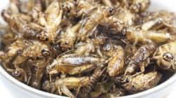 핀란드에서 귀뚜라미로 빵을