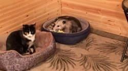 할머니가 보살피던 '고양이'는 고양이가