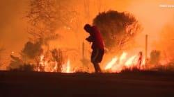 미국 캘리포니아 산불 속에서 토끼를 구한