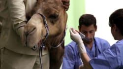 Dubai ouvre le premier centre hospitalier au monde pour