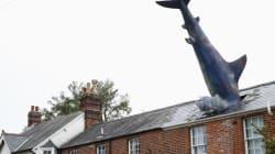영국 어느 집 지붕에 30년 간 박혀있던 상어의