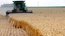 La Tunisie importe pour plus de 30 millions de dollars de céréales, selon Business