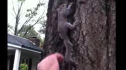 구조한 다람쥐를 돌려보내려다 발생한