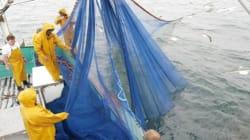 L'accord de pêche UE-Maroc est invalide (avocat général de la