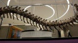 Le Maroc veut savoir comment le fossile de dinosaure vendu au Mexique est sorti du