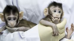 중국이 세계 최초로 원숭이 복제에