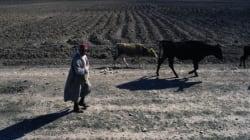 Tunisie: Bancarisation et développement
