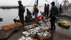 L'accord de pêche Maroc-UE est valide, mais pas au Sahara selon la Cour de justice