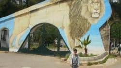 La gestion du parc de Ben Aknoun sera confiée à des cadres américains et