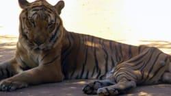 Dans un zoo du Venezuela, des bêtes sacrifiées pour en nourrir